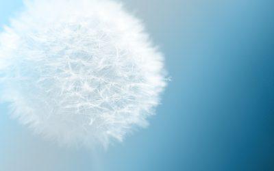 En personlig beretning – 5 dages mindfulness retreat i Norwood Massachusetts, USA